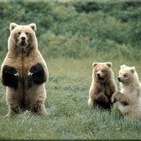 Jung, Mama Grizzlies, Sarah Palin