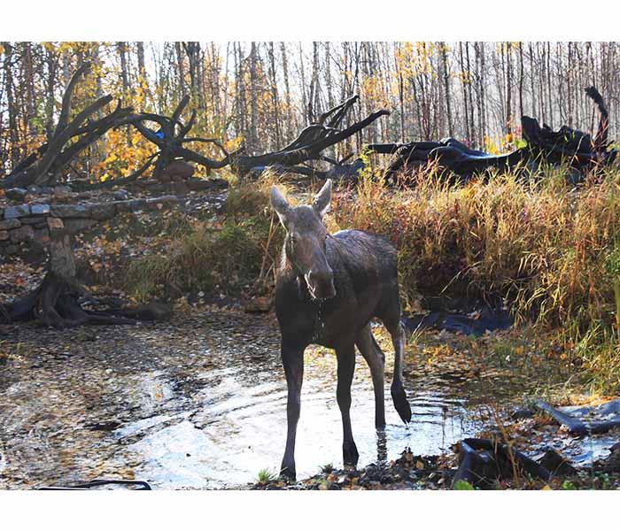 Moose-Pond