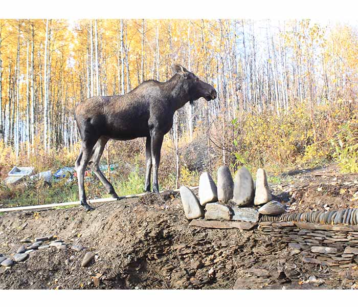Sanctuary-Jung-Moose-Bear-Paw